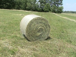 Round Bale just after being made