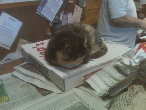 Pizza guard cat