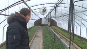 Todd looking at progress of winter greenhouse crops