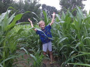 Brett seeing how high this corn is going to grow!