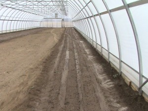 Soil in greenhouse after planting was done