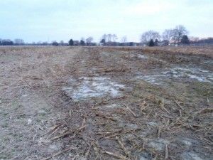 liquid manure after application before plowdown
