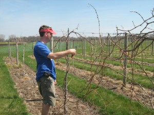 Todd getting our vines ready to Rock and Roll