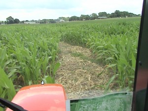 View of Corn Maze Paths before Roto-tilling