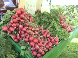 Hartville Radishes from Maize Valley Farms